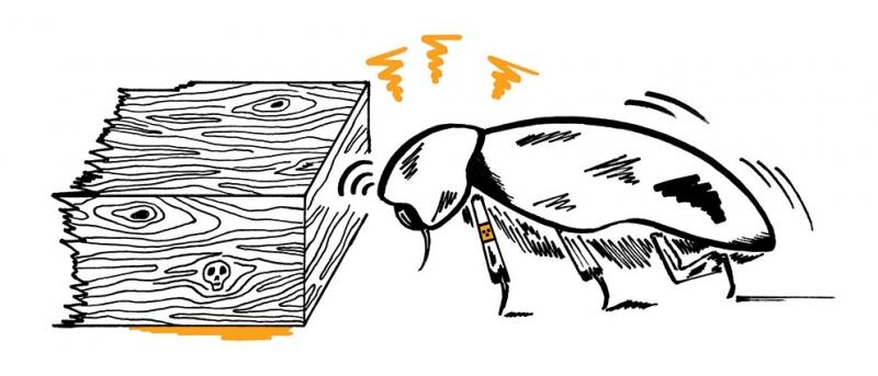 http://annevagt-illustration.com/files/gimgs/th-28_Nagekaefer-FINAL.jpg